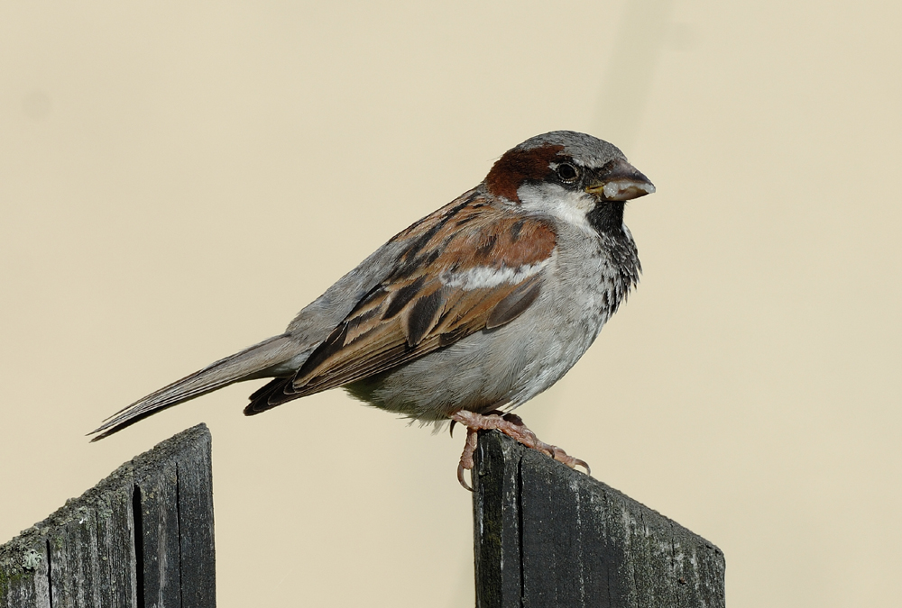 European Bird Populations Have Experienced Sharp Declines Over The Past 30 Years