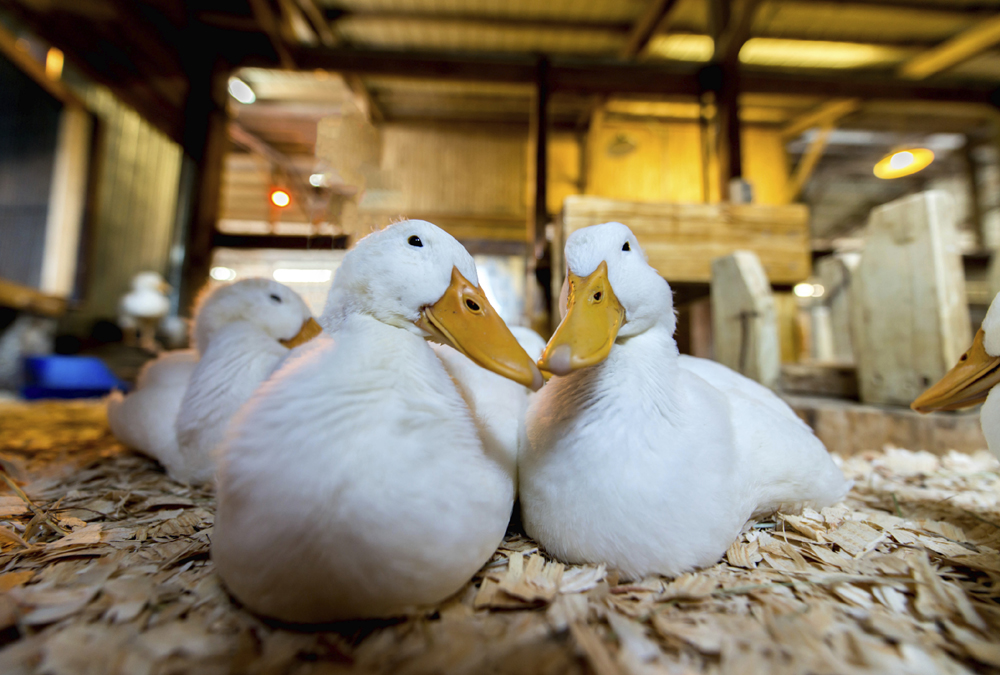 New Bird Flu Cases Confirmed In The UK And The Netherlands