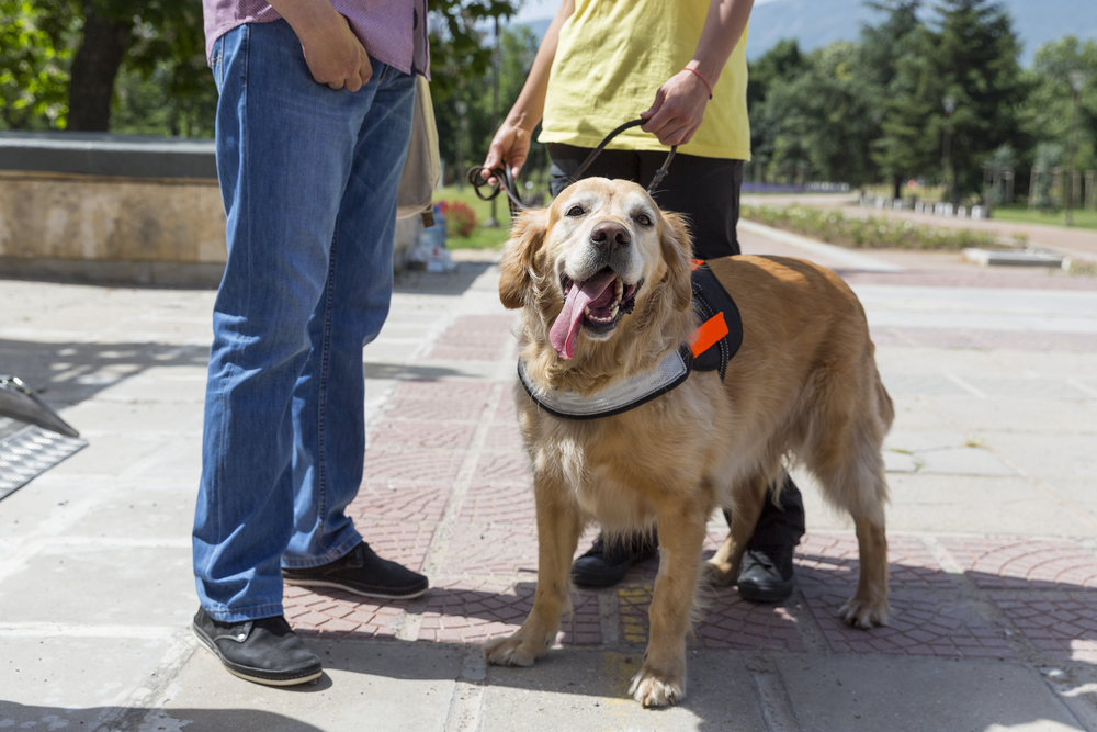 Should I get a Service dog for my Fibromyalgia?