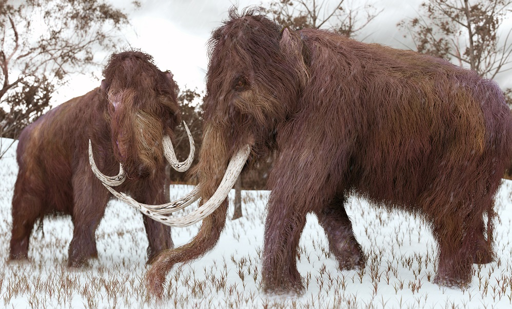 Harvard scientist wants to 'de-extinct' the woolly mammoth. He's getting close.
