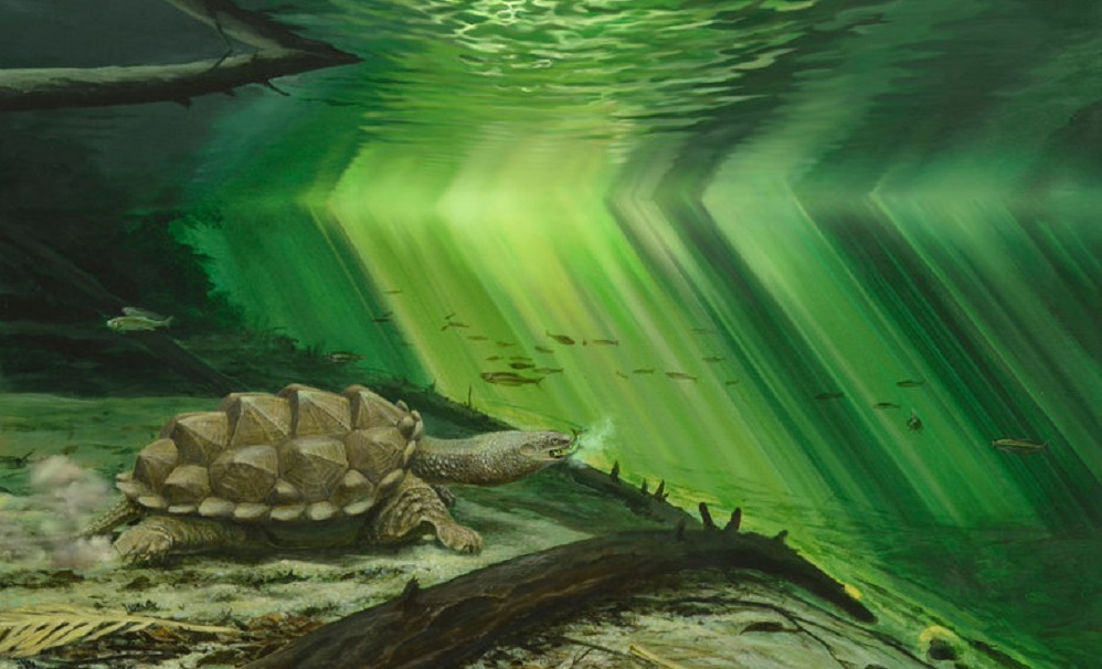 Study discovers why turtles evolved to hide in their shells