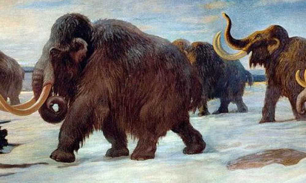 Genetic disaster killed the mammoths, study finds