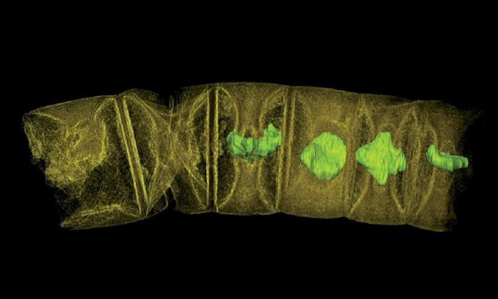 These 1.6 billion year old fossils could be the oldest plants ever discovered
