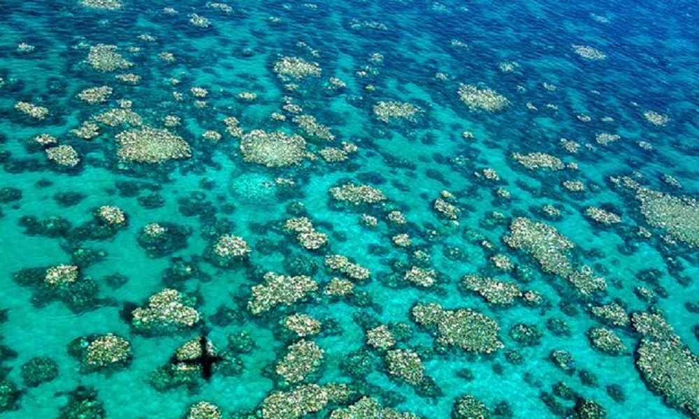Two-thirds of the Great Barrier Reef is bleached from climate change