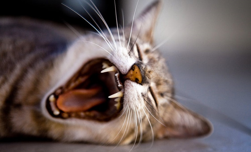 Study shows why you shouldn't declaw your cats