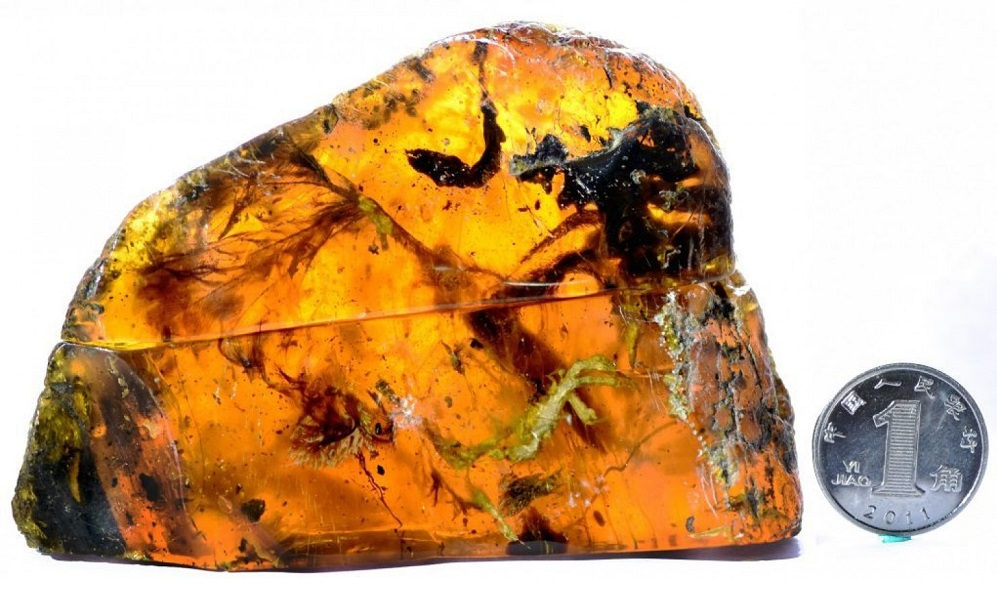 Nearly complete ancient baby bird discovered encased in amber