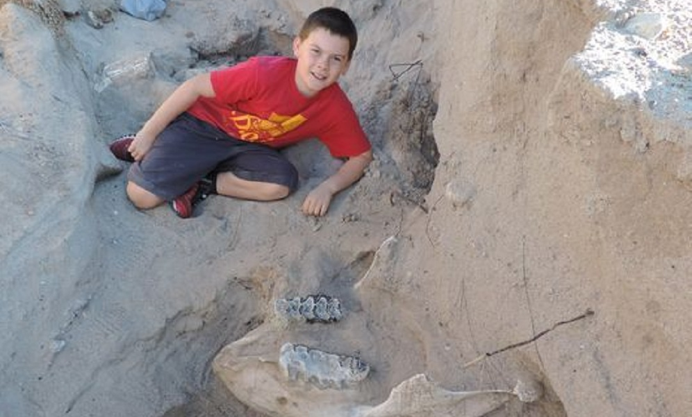 Boys discover ancient fossil while playing in the desert