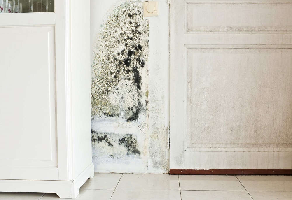 Does Mold Cause Cancer and Should You Worry?
